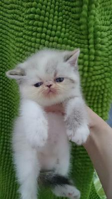 Доставить котенка автотранспортом из Ростов-на-Дону в Москва