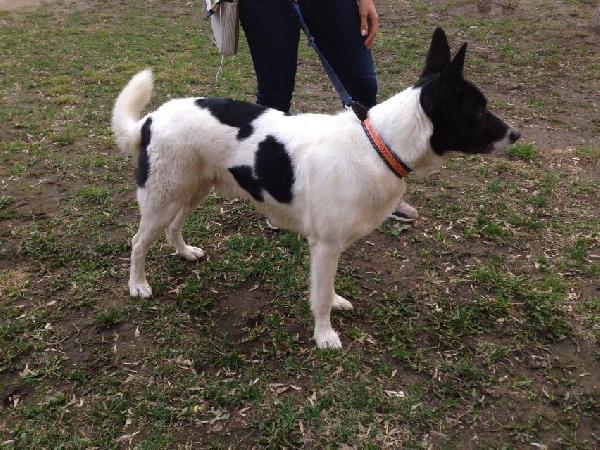 Сколько стоит перевезти собаку  недорого из Домодедово в Евпатория