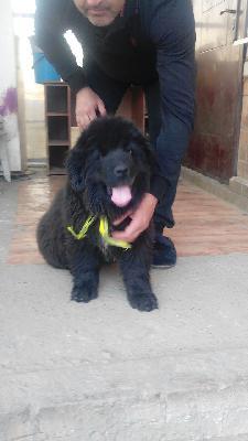 Доставить щенка из Кропоткин в Екатеринбург