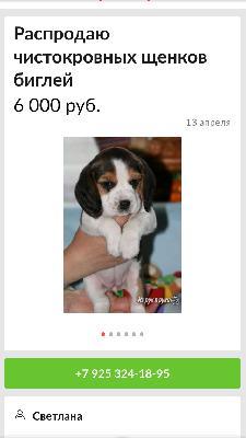 Сколько стоит доставка щенка недорого из Москва в Чебоксары