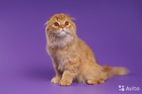 Доставить котенка дешево из Нижний Новгород в Тольятти