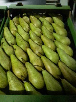 Доставка фруктов из Удовице в Санкт-Петербург