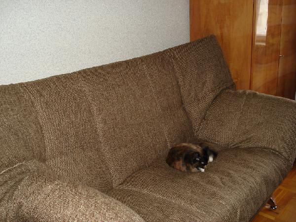 Сколько стоит доставка дивана из Москва в Мытищи