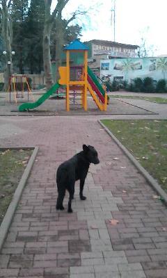 Доставить собаку  автотранспортом из Новороссийск в Новосибирск