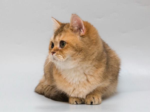 Транспортировка 1 кошки из Славянск-на-Кубани в Китай. Шеньян