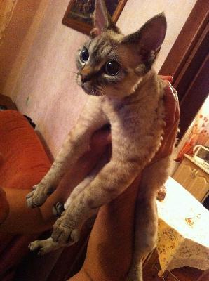 Сколько стоит транспортировка кота недорого из Красноярский край в Дудинка