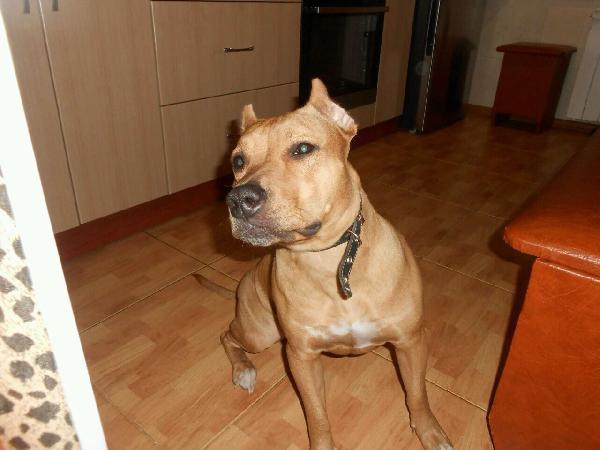 Сколько стоит перевезти собаку  недорого из Новосибирск в Сочи