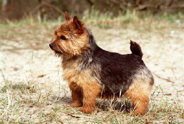 Доставить собак недорого из Архангельск в Кемерово