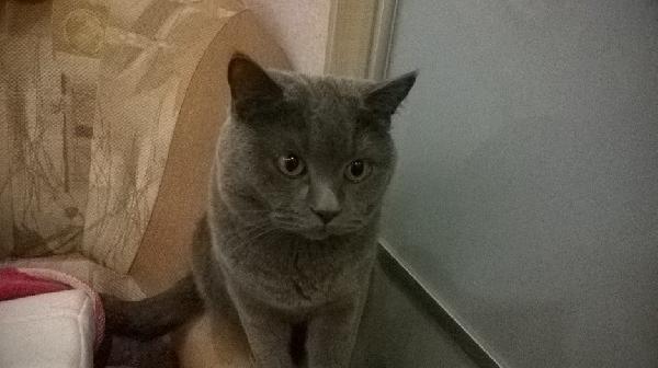 Отвезти собак, Кошек дешево из Уфа в Москва