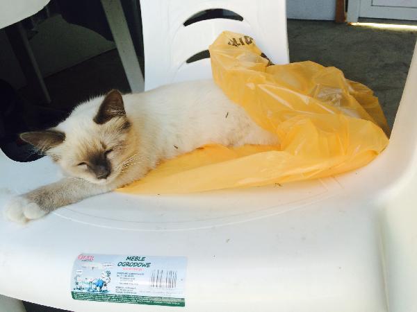 Перевезти кошку дешево из Краснодар в Санкт-Петербург