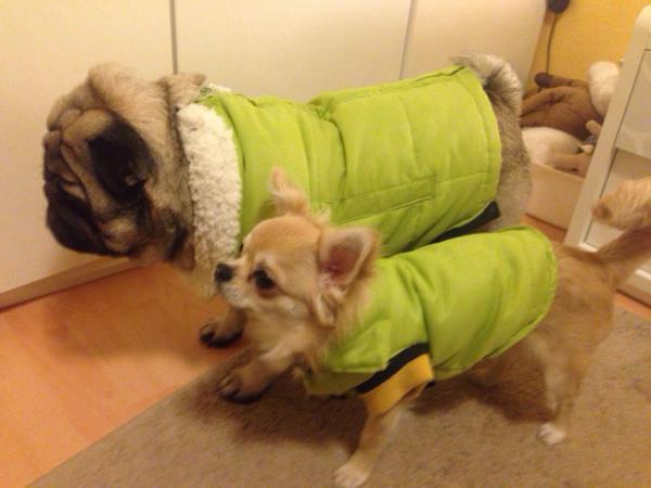 Доставка собак дешево из Россия, Санкт-Петербург в Соединенные Штаты, Хьюстон