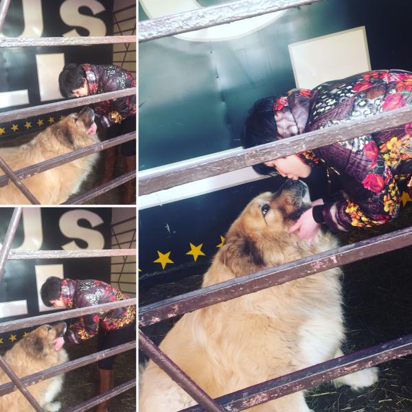 Доставка собак больших недорого из Санкт-Петербург в Люберцы