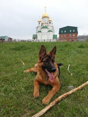 Перевезти собаку  дешево из Россия, Барнаул в Армения, Ереван