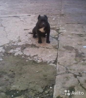 Транспортировка щенка из Брянска в Алушту