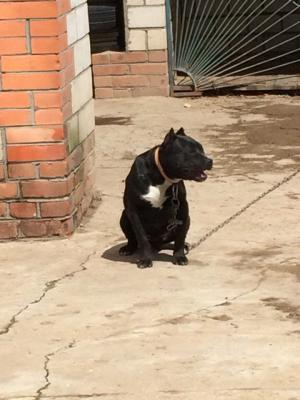 Доставка щенка недорого из Клинцы в Симферополь