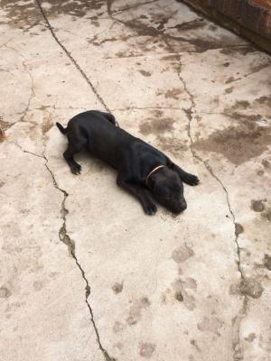 Транспортировать щенка автотранспортом из Брянская область в Симферополь