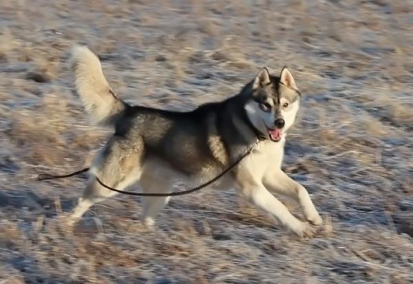 Отвезти собак из Барнаул в Магнитогорск