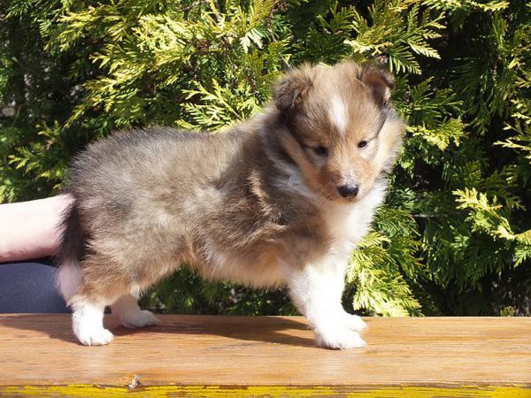 Отвезти щенка 2 кг недорого из Краснодар в Адлерский