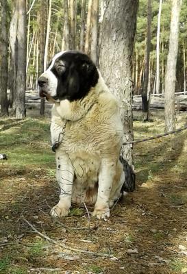 Услуги по доставке собаки  из Россия, Москва в Соединенные Штаты, Нью-Йорк