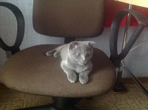 Доставка Кошек из Новокузнецк в Темрюк