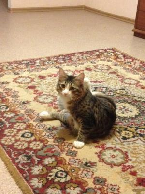 Сколько стоит отвезти Кошек недорого из Волгоград в Тобольск