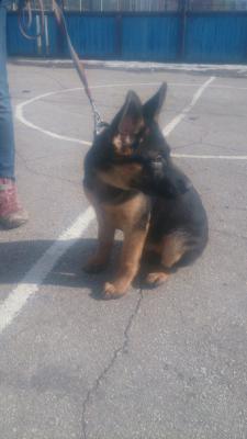 Услуги по перевозке собак из Тула в Калининград