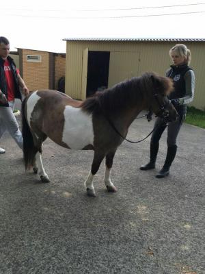 Сколько стоит перевезти лошадь недорого из Ростов-на-Дону в Москва