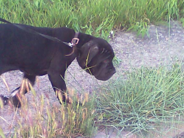 Доставить собак автотранспортом из Керчь в Краснодар