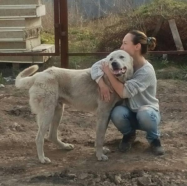 Перевозка взрослой собаки  из Набережные Челны в Нижнекамск