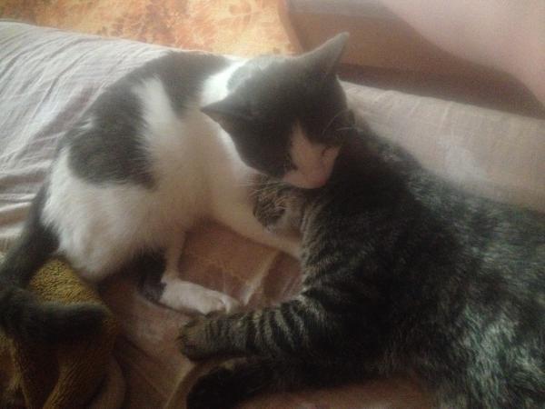 Отвезти кошку недорого из Волжский в Петергоф