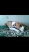 Отвезти собаку  автотранспортом из Саратов в Котельники