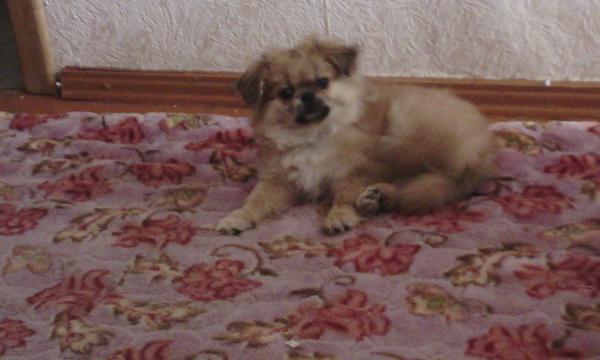 Услуга по транспортировке собак из Хабаровск в Екатеринбург
