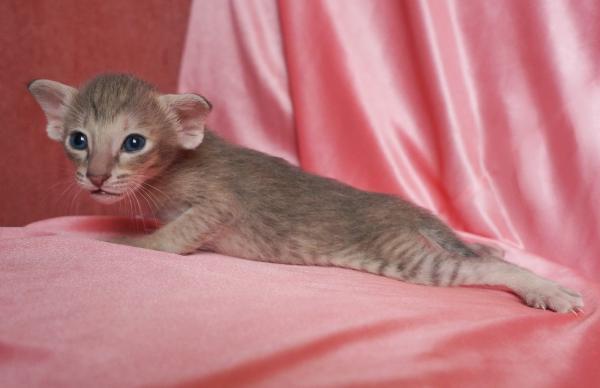 Сколько стоит перевезти кошку недорого из Краснодар в Иркутск