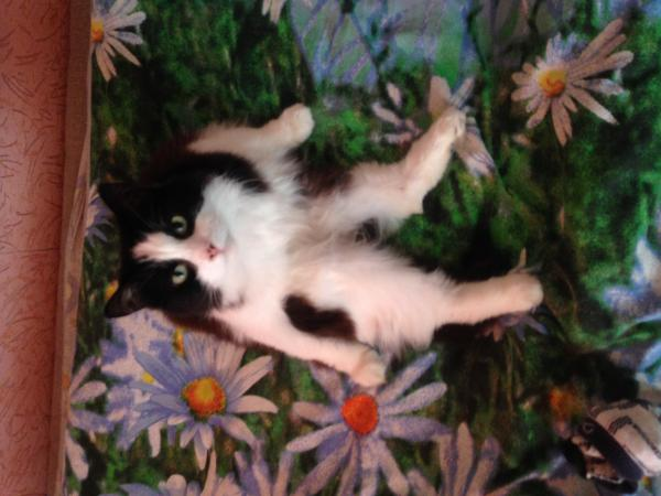 Доставить кота недорого из Стерлитамак в Санкт-Петербург