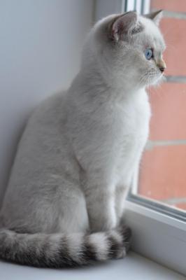 Перевезти котенка дешево из Белгород в Воронеж