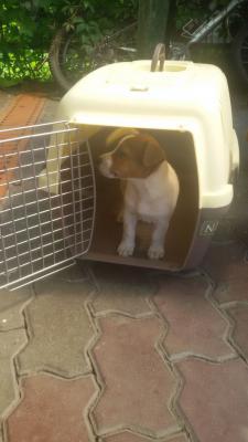 Сколько стоит перевезти щенка недорого из Ростов-на-Дону в Сочи