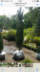 Перевозка уличных дерев В горшках недорого из 74 км ш.Москва-Нижний Новгород в Владивосток