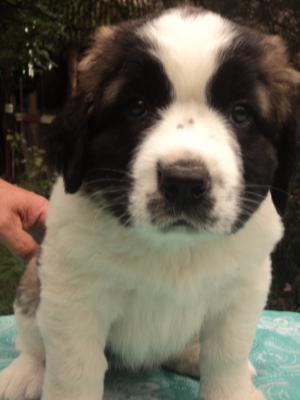 Сколько стоит доставка собаки  недорого из Смоленск в Калининград