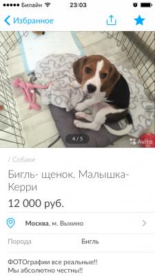 Перевозка щенка из Москва в Екатеринбург