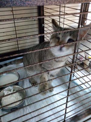 Сколько стоит транспортировать кошку недорого из Саранск в Москва