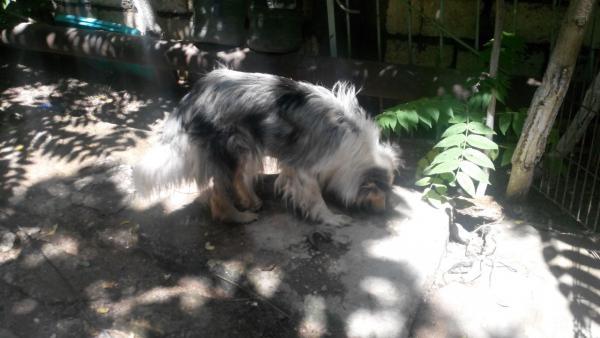 Доставка собак дешево из Дербент в Стерлитамак