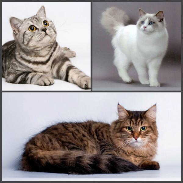 Отвезти котенка дешево из Россия, Москва в Таджикистан, Душанбе