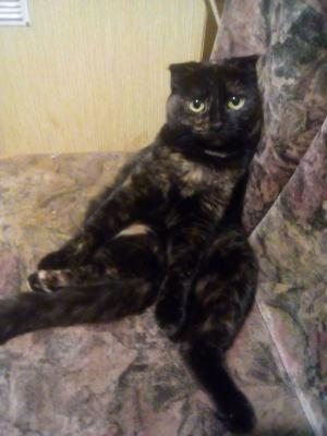 Перевезти кошку недорого из Волгоград в Санкт-Петербург