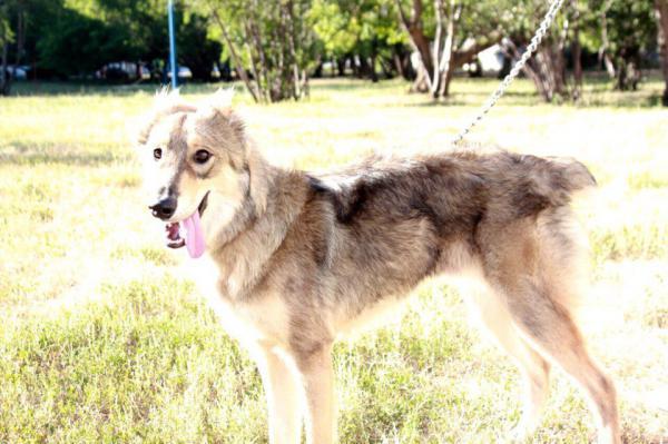 Отвезти собак автотранспортом из Салават в Краснодар