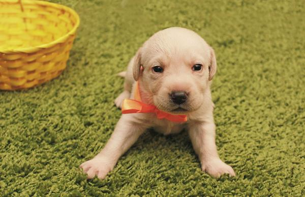 Сколько стоит отвезти щенка недорого из Украина, Черкассы в Россия, Санкт-Петербург