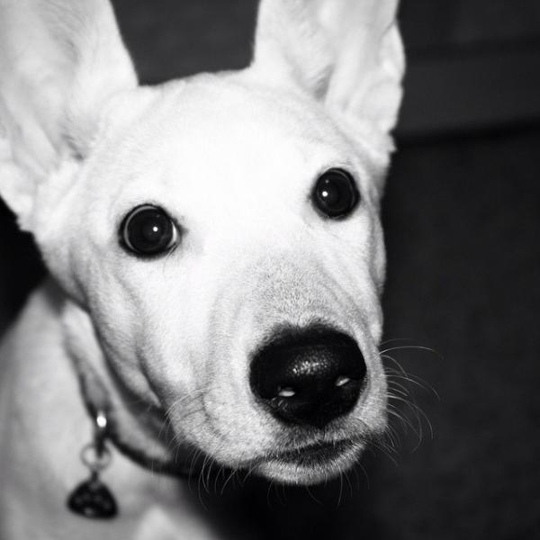 Сколько стоит транспортировка собак недорого из Красногорск в Новороссийск