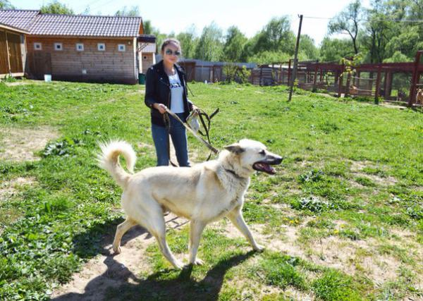доставка собаки (метис белой овчарки) из Москва в Алексин