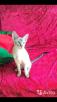 Перевезти котенка дешево из Москва в Краснодар