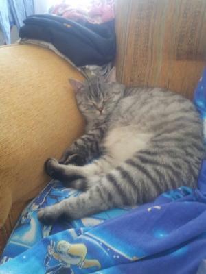 Перевозка кошки дешево из Екат в Москва