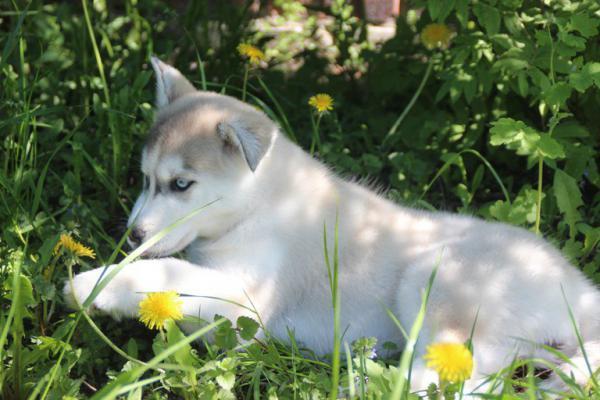 Транспортировка щенка из Волгоград в Уфа